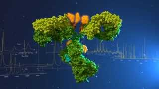 Antibody Drug Conjugates: Characterization