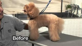 トイプードルなど人気6犬種のカット・トリミングの映像教材です。 これ...