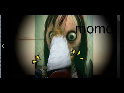 La verdad sobre momo el mejor video