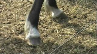 Verwahrlost hinter Stacheldraht - Pferdeleben im Emsland / PETA