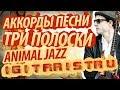 Разбор и аккорды песни Три полоски Animal Jazz mp3