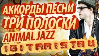 "Разбор и аккорды песни ""Три полоски"" - Animal Jazz"