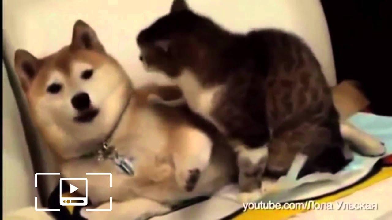 Человеку, гифки кошки и собаки