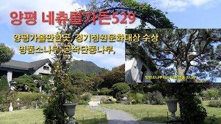 양평 네츄럴가든529 정원앞 명품소나무.천혜의 자연경관…