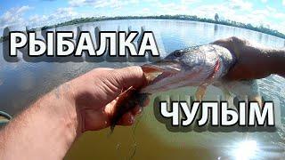 Щука на жерлицы в июле.Рыбалка на реке Чулым