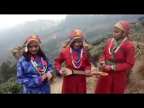 Santhali seren darjiling chay bagan