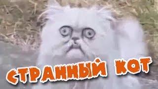 Странный кот смотрит (RUS) (ВНИМАНИЕ, МАТ!!) / Wired cat watching
