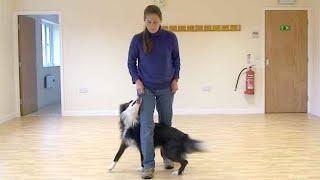 Dancing with dogs: Leg weaving