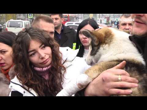 UA: ПОДІЛЛЯ: Травмований собака знайшов родину в Хмельницькому