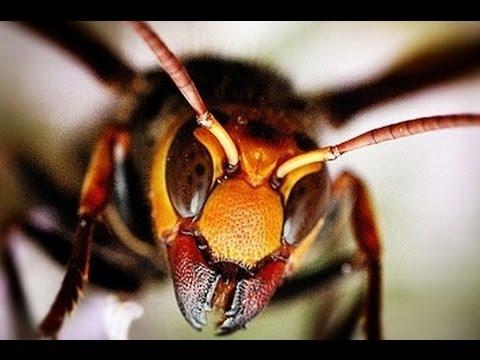 El laboratorio de Doki Parte Dos con hormigas, gusanos, arañas, mosquitos y abejas! de YouTube · Duración:  11 minutos 6 segundos  · 81 visualizaciones · cargado el 11.10.2017 · cargado por Divertidos Videos de Juegos Para Niños