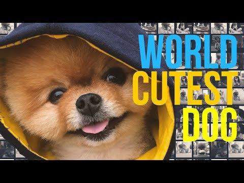Funny dog videos instagram by 👑 BEST OF INSTAGRAM🔝