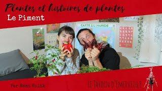 Plantes et histoires de plantes : le Piment