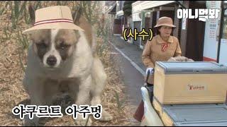 1일 야쿠르트 아주멍니 체험하던 강아지 근무지 이탈한 사연ㅋㅋ [체험 삶의 견장 3화] ㅣFriendship Of A Delivery Lady And A Stray Dog