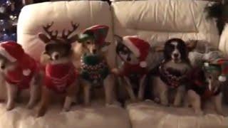 Magic Christmas ornament turns dogs into festive pups! thumbnail