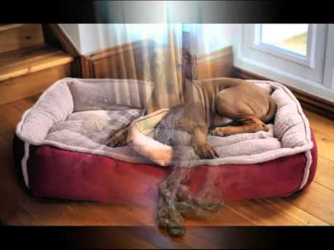 Pictures Of Dog Beds Dog Beds Dogs Youtube