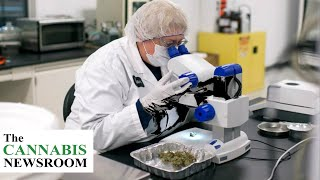New Legislation Advances That Finally Expand Cannabis Research Nationwide