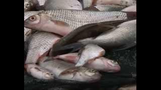 "Рыбак рыбаку 286 ""Ловля плотвы в проводку"".."