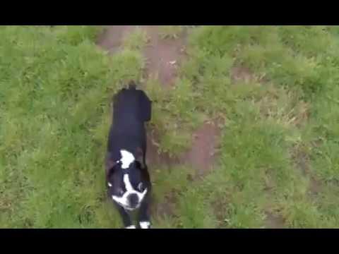 Dog does a Frontflip 😁