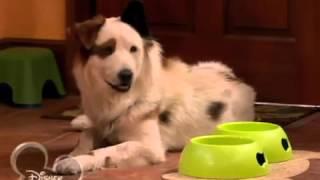 Собака точка ком   1 сезон, 11 серия