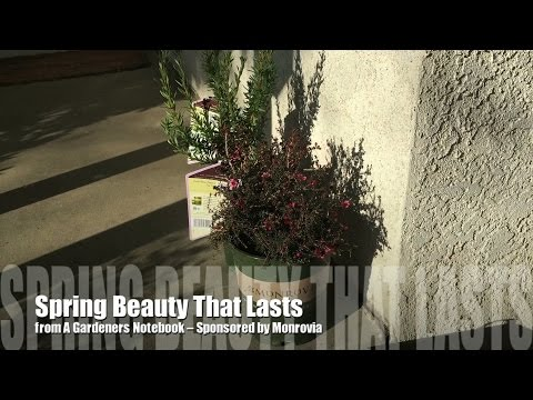 Spring Beauty That Lasts - Sponsored by #Monrovia - My 2 new plants!