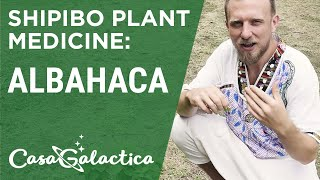 Shipibo Plant Medicine Albahaca - Ayahuasca Plant Spirit Healing Retreat Peru | Casa Galactica