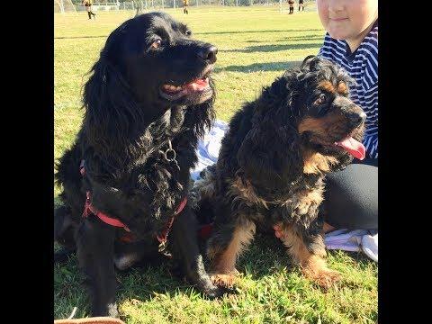 Benny & Benji | Adopt A Dog QLD