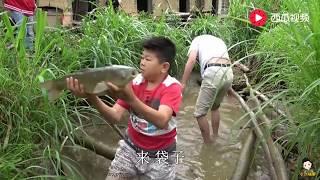 小六和四哥去放塘,山泉水喂养的草鱼条条肥美,你想吃吗?