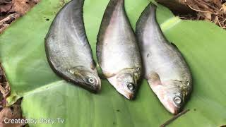 Primitive Survival Skill ; Learning to Grilled Fish in the Forest thumbnail