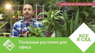 Полезные растения для офиса