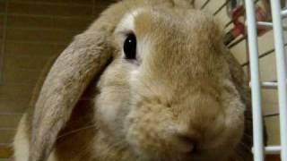 さくら 081101 きになるのら みみちゃんblog http://mahoris.blog.so-net.ne.jp/