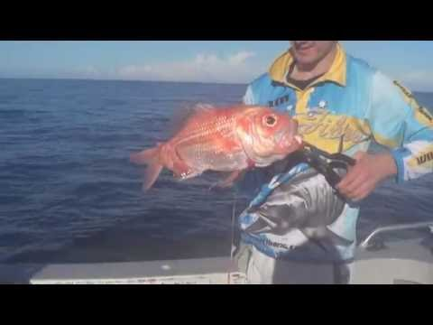 Catching Snapper & Nannygai Offshore