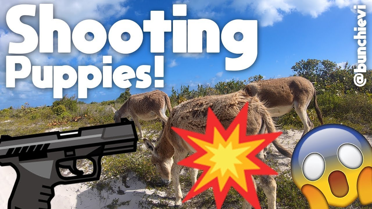 Download Shooting Puppies in Paradise