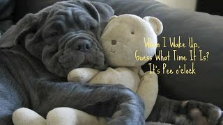 How To Potty Train Your Cane Corso Puppy, HELP! House Training Your Cane Corso.