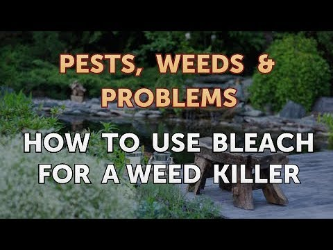 How to Use Bleach for a Weed Killer