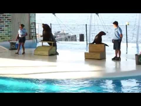 Subic Ocean Adventure, Sea Lion Marine Patrol