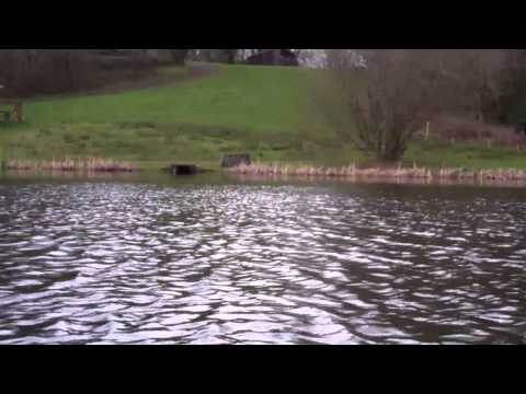 Fly Fishing At Garnffrwd Trout Fishery