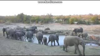 Afryka - Djuma  Słonie przy wodopoju 2016 07 17 16 37 46 785