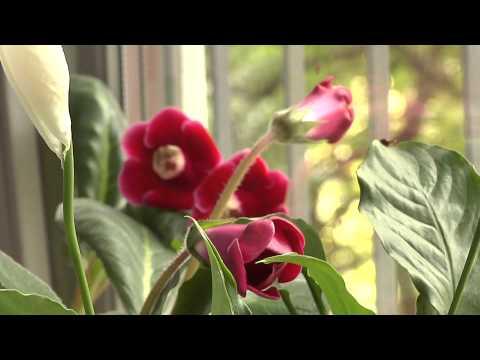 Жизнь цветов на подоконнике
