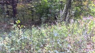 видео Чудодейственное эфирное масло лаванды