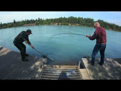 Alaska 2019 Kenai River