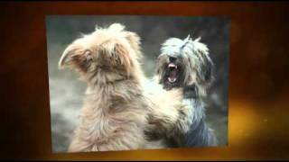 Stop Dog Aggression-dog Training Sunshine Coast