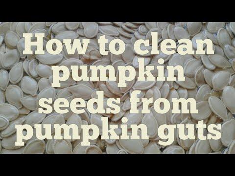 how to clean pumpkin seeds from the pumpkin guts♡sweet pink home♡