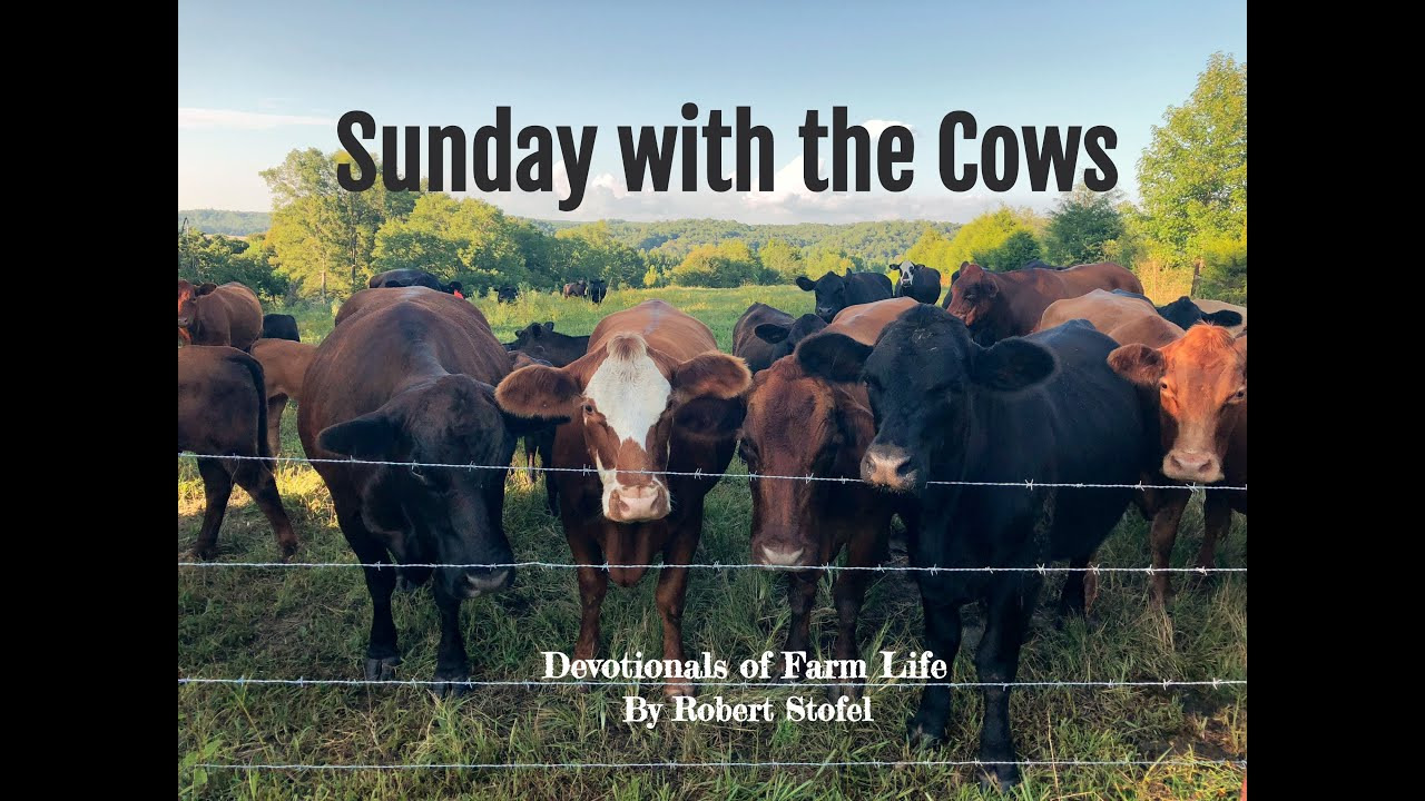 """Sunday With the Cows """"Between a Rock and a Hard Place"""" (Season. 1, Episode 4)"""