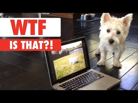 WTF IS THAT?! | Confused Pets Compilation