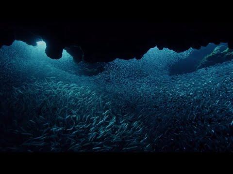 Tarpon Fish Hunting   BBC Earth