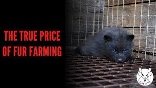 The price of fur - the reality of Polish fur industry