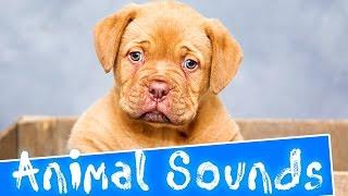 Animal sounds for Children - 35 Amazing Animals