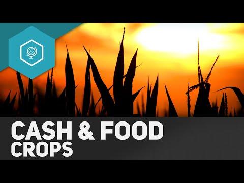 Cash Crops und Food Crops - Landwirtschaft in Entwicklungsländern 3