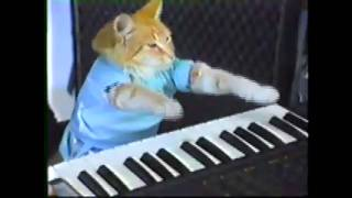 Play Clay Bennett Off, Keyboard Cat!!! (Sonicsgate.org)