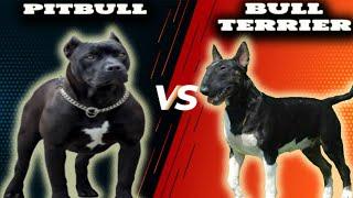 Pitbull VS Bull TerrierComparison
